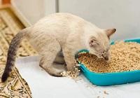Ваша кошка или кот разбрасывает содержимое лотка?
