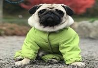 Одежда для собак: необходимость или баловство?