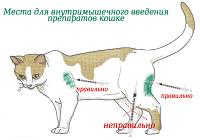 Как сделать укол животному - Внутримышечная инъекция